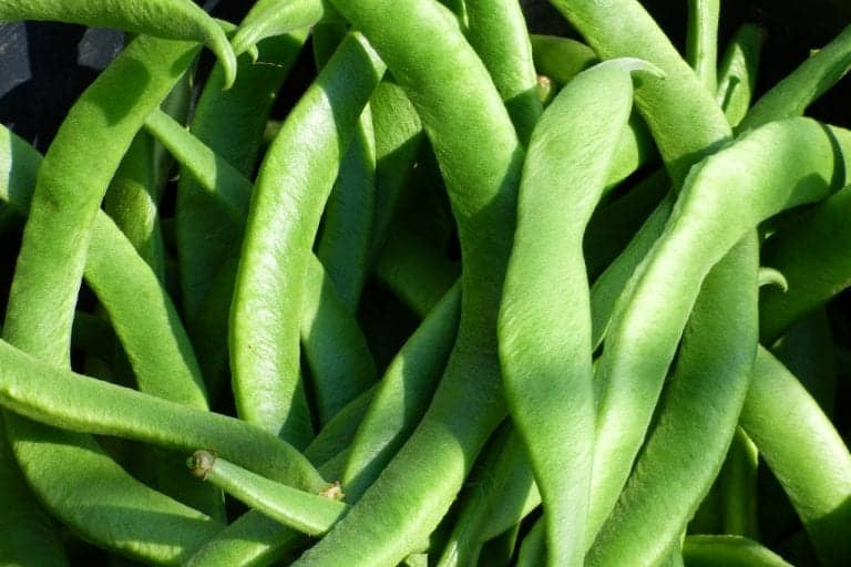 Can You Freeze Runner Beans